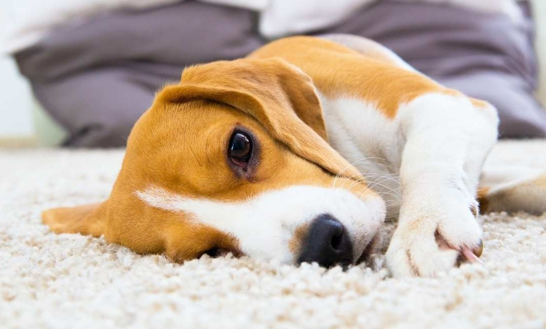 What is the best type of carpet cleaning method?